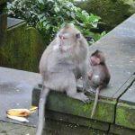 猿の森(モンキーフォレスト)